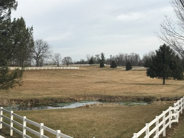 Photo of Bowman Horse Fields